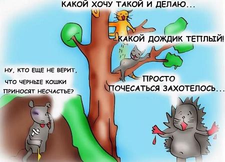 анекдоты и приколы про животных и зверей