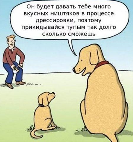 новый анекдот про собак и хозяев