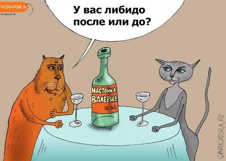 улетные анекдоты про кошек и котов